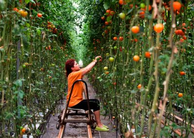 Fotografía industria agrícola